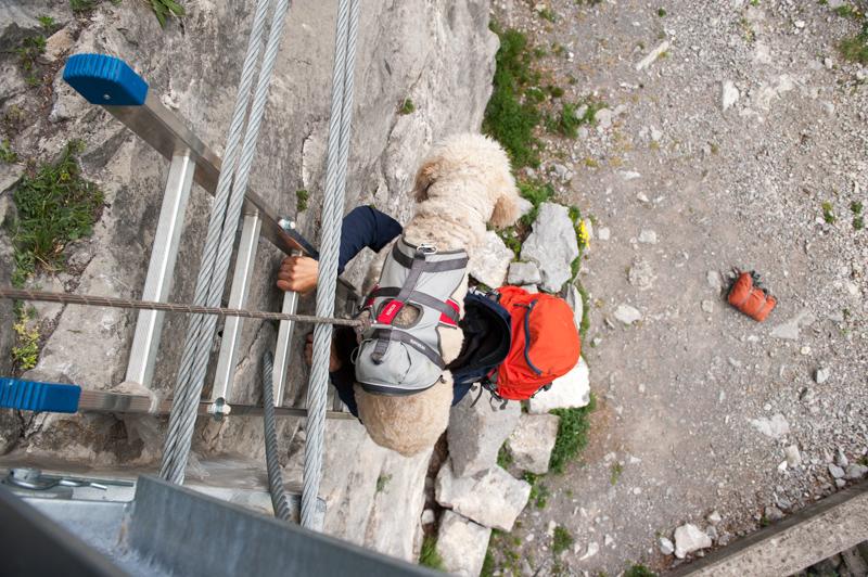 Klettersteigset Hund : Bergsteigen leichte klettersteige mit hund haltung und