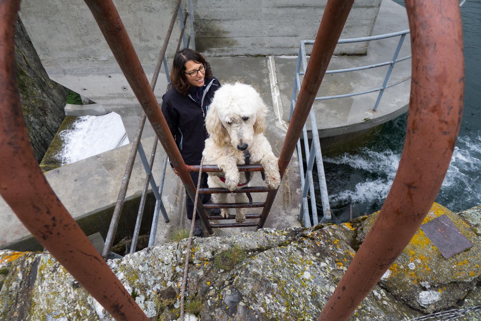 Klettergurt Hund : Wanderungen mit hund unser wanderthread seite urlaub